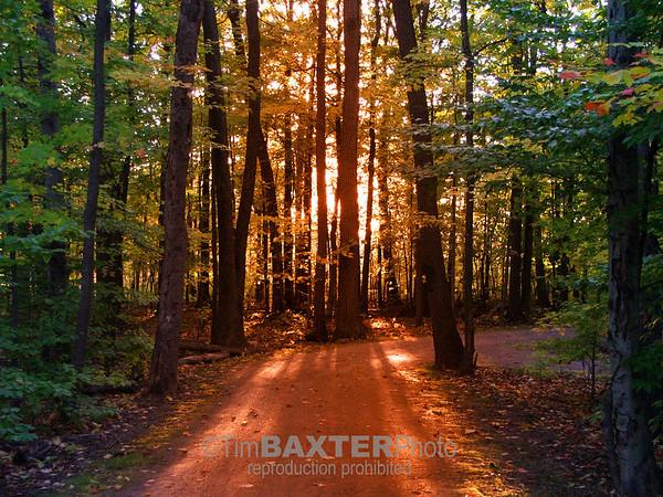 Sunlit path.