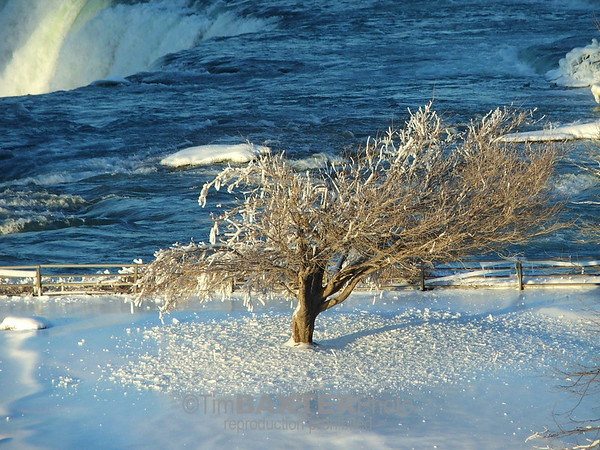 Another icey tree near the brink of the American Falls